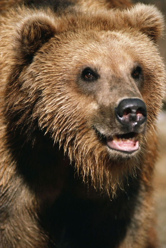 Bear Photo Gallery